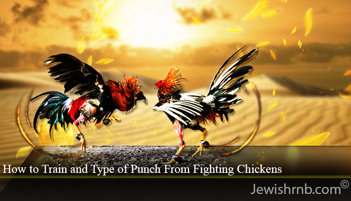 How to Train and Type of Punch From Fighting Chickens