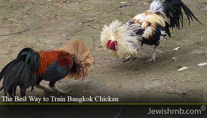 The Best Way to Train Bangkok Chicken